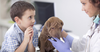 veterinary examine Shar Pei dog ,young boy looking his friend